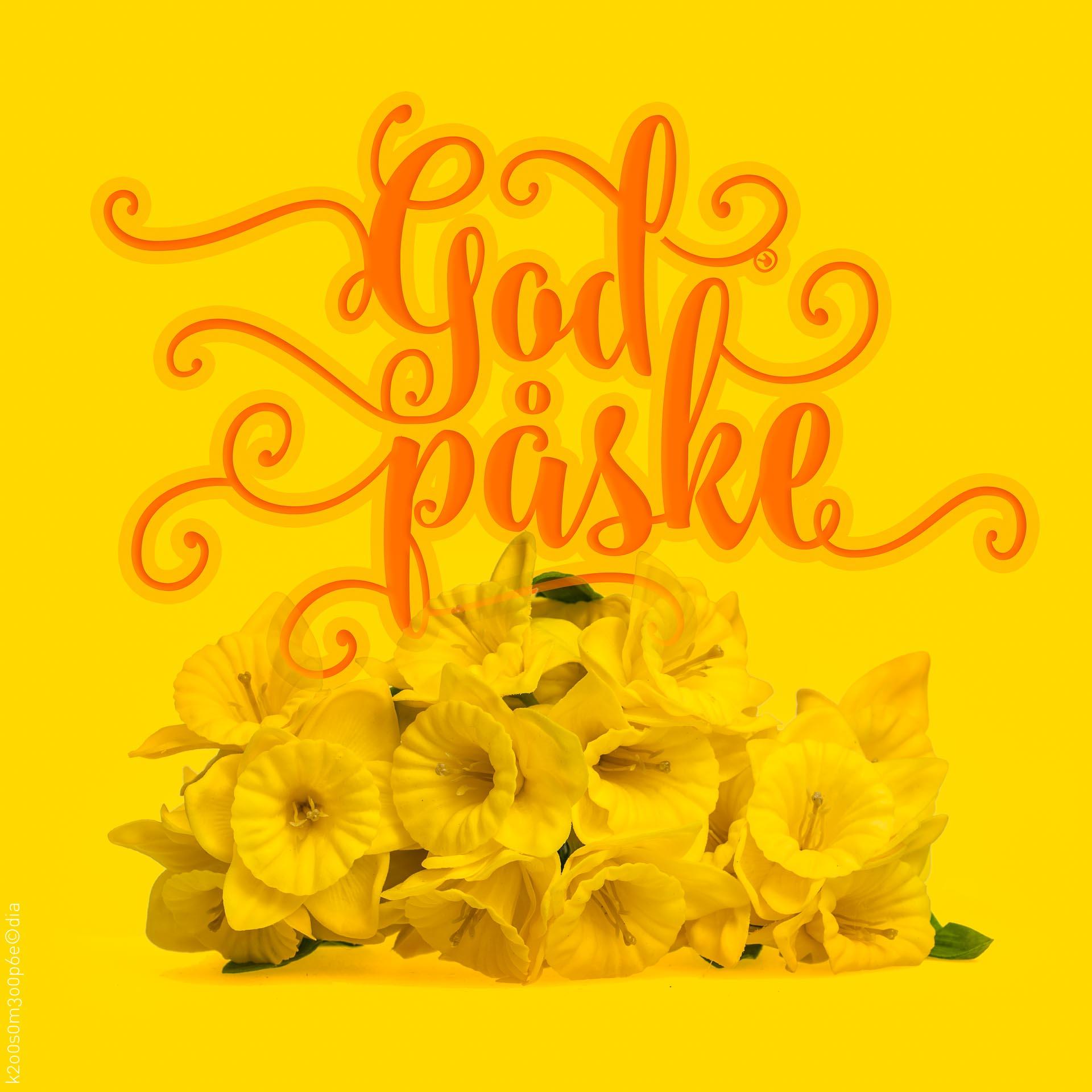 Påskeliljer påskehilsen